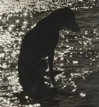 of the lake by william wegman