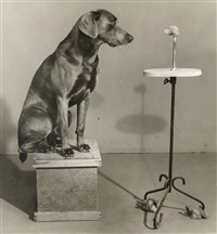 contemplating the bust of man ray by william wegman