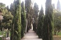 on translation : cimitero, venice by antoni muntadas