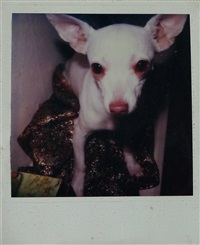 untitled(lap dog) by jean-michel basquiat