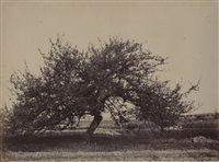 fruit tree by eugène cuvelier