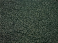 untitled (blackwater 7) by richard misrach