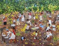 começando a colheita de cacau/ the start of cacao by mara toledo