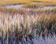 marsh grass evening light, south carolina by christopher burkett