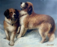 pair of st. bernards playing in snow by john emms