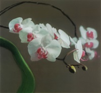 orchidee i by gerhard richter