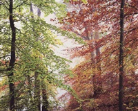 peaceful autumn forest, ohio by christopher burkett