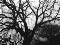 study of tree branches, may 12 by robert longo