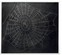 untitled (web i) by vija celmins
