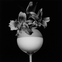 tiger lily by robert mapplethorpe