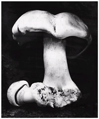 toadstool by edward weston